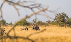 safari-14
