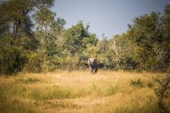 safari-15