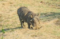 safariamy-25