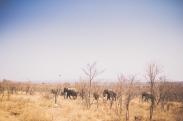 safarijon-8